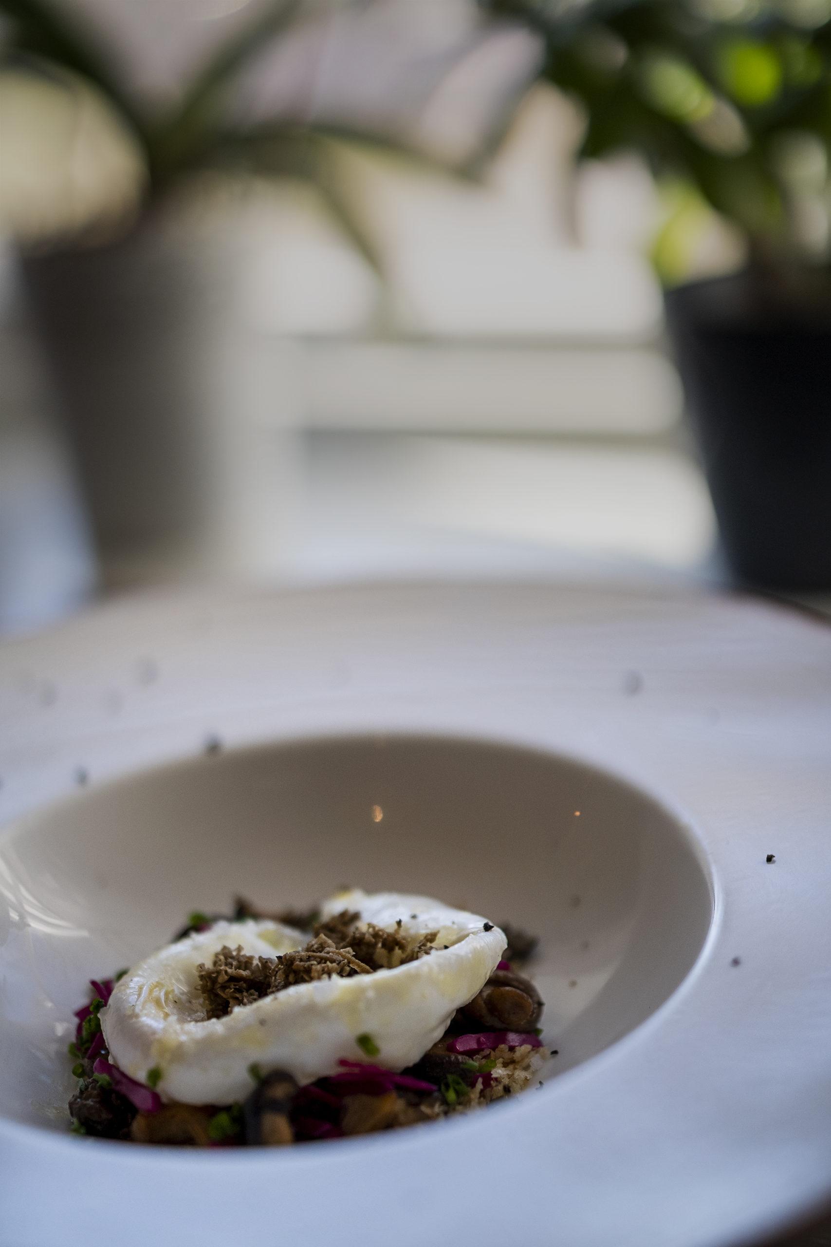 Shiitake, picklad rödkål från Källsprång, citronstekt panko & Gotlandstryffel